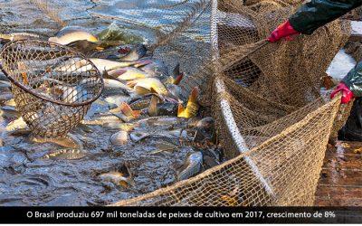 Caixa Econômica lança linha de crédito para piscicultura
