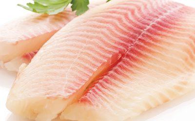 Peixe BR solicita ao MAPA habilitação dos frigoríficos de peixes de cultivo para exportação para Israel