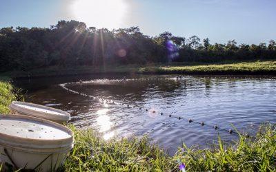Projetos de piscicultura de até 5 hectares de lâmina d'água ou 10 mil m3 de água (tanques-rede) de MT estão dispensados de licenciamento ambiental