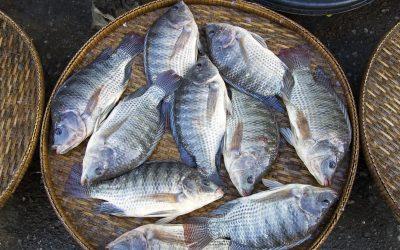 Definição dos aditivos alimentares para pescado aumentará oferta de produtos derivados