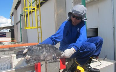 Peixe BR e APEX avançam negociação para presença dos peixes de cultivo no mercado internacional