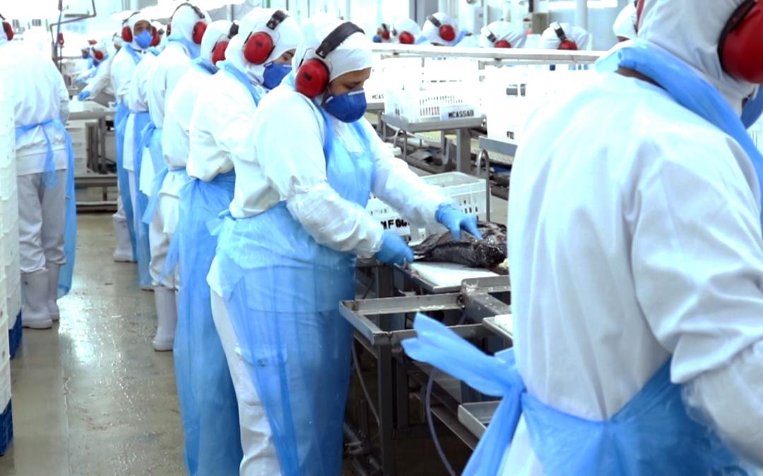 Piscicultura exporta 158% mais em junho e 83% no 2º trimestre. Paraná lidera